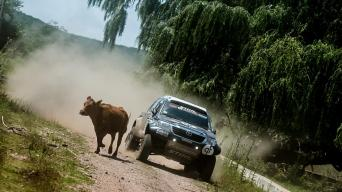 Gyvūnai kelyje/Marian Chytka nuotrauka