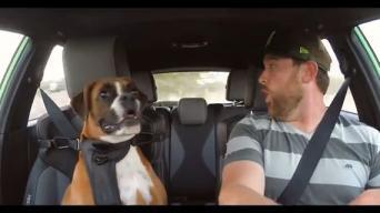 Kaip šuo jaučiasi šturmano vietoje?